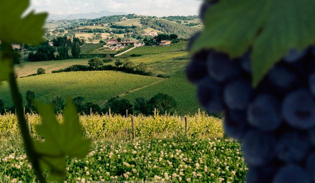 vitigno Sagrantino di Montefalco