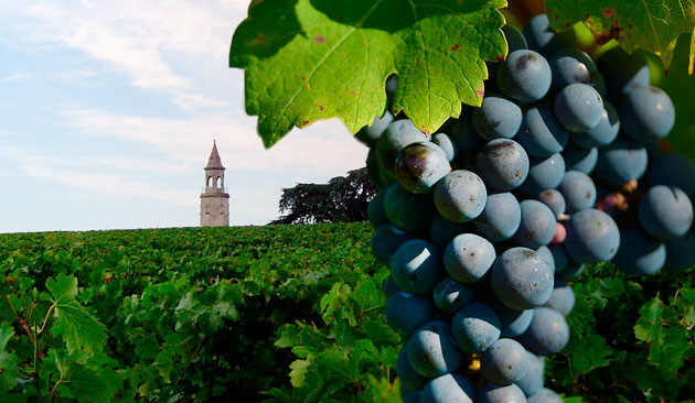 vitigno bordeaux