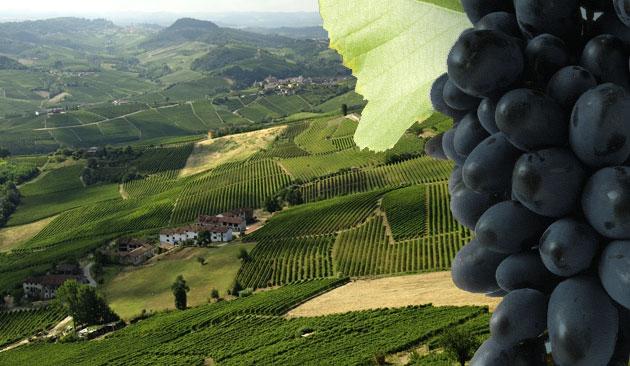 vitigno Dolcetto